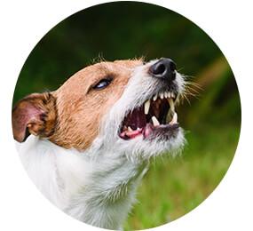 ofortmaßnahmen nach einem Hundebiss
