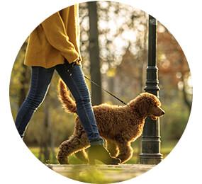 Für Allergiker zu empfehlen: hypoallergene Hunderassen