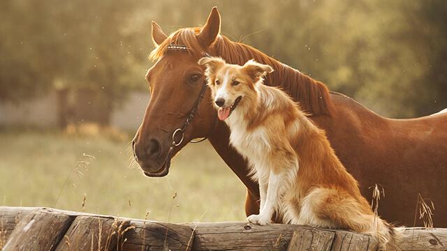 Was ist eine Tierhalterhaftpflichtversicherung?